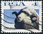 SOUTH AFRICA - CIRCA 1972: A stamp printed in South Africa (RSA), depicts a sheep Merino, circa 1972 — Stock Photo