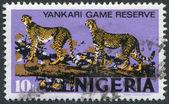 NIGERIA - CIRCA 1973: Postage stamps printed in Nigeria, a leopard in the Yankari National Park, circa 1973 — Stock Photo