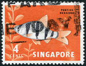 SINGAPORE - CIRCA 1981: Postage stamps printed in Singapore, is depicted toy fish the pentazona barb (Puntius pentazona), circa 1981 — Stock Photo