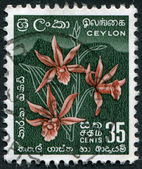 CEYLON - CIRCA 1952: A stamp printed in the Ceylon, shows a flower Star Orchid, circa 1952 — Stock Photo