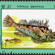 NORTH KOREA - CIRCA 1979: A stamp printed in North Korea, shows a fish Inimicus japonicus, circa 1979 — Stock Photo