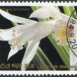 NORTH KOREA - CIRCA 1984: A stamp printed in North Korea, orchid shows Thunia bracteata, circa 1984 — Stock Photo
