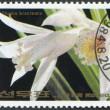NORTH KOREA - CIRCA 1984: A stamp printed in North Korea, orchid shows Thunia bracteata, circa 1984 — Stock Photo