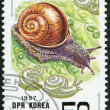 NORTH KOREA - CIRCA 1997: A stamp printed in North Korea shows Asian snail (Fruticicola lubuana), circa 1997 — Стоковая фотография