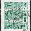KOREA - CIRCA 1963: A stamp printed in Korea, shows a deciduous plant Abeliophyllum (White Forsythia), circa 1963 — Stock Photo