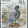 Stock Photo: NEW ZEALAND - CIRC1987: stamp printed in New Zealand, shows bird Blue Duck (Hymenolaimus malacorhynchos), circ1987