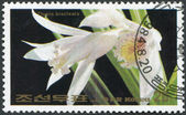 NORTH KOREA - CIRCA 1984: A stamp printed in North Korea, orchid shows Thunia bracteata, circa 1984 — Zdjęcie stockowe
