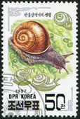 NORTH KOREA - CIRCA 1997: A stamp printed in North Korea shows Asian snail (Fruticicola lubuana), circa 1997 — Stock Photo