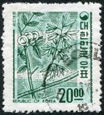 KOREA - CIRCA 1963: A stamp printed in Korea, shows a deciduous plant Abeliophyllum (White Forsythia), circa 1963 — Photo