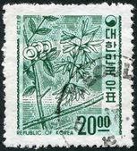 KOREA - CIRCA 1963: A stamp printed in Korea, shows a deciduous plant Abeliophyllum (White Forsythia), circa 1963 — Stock Photo