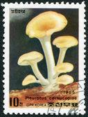 Descripción: corea del norte - circa 1985: un sello impreso en corea del norte, muestra una seta catathelasma ventricosum, circa 1985 — Foto de Stock