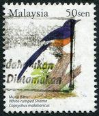 малайзия - приблизительно 2005: почтовые марки, отпечатано в малайзии, изображает птицу острохвостая шама (copsychus куфия), приблизительно 2005 — Стоковое фото