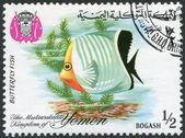 KINGDOM OF YEMEN - CIRCA 1967: A stamp printed in the Kingdom of Yemen, shows Tropical Fish Butterflyfish, circa 1967 — Stock Photo