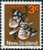 NEW ZEALAND - CIRCA 1970: A stamp printed in New Zealand, shows the insect Lichen Moth (Declana egregia), circa 1970 — Stock Photo