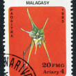 MALAGASY REPUBLIC-CIRCA 1985: Postage stamps printed in Malagasy, shows a tropical flower Aeranthes grandiflora, circa 1985 — Stock Photo