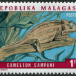 MADAGASCAR - CIRCA 1973: Postage stamps printed in Madagascar, is dedicated to Campani Chameleon, circa 1973 — Stock Photo