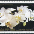 NORTH KOREA - CIRCA 1984: A stamp printed in North Korea shows an orchid Cattleya loddigesii, circa 1984 — Stock Photo