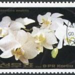 NORTH KOREA - CIRCA 1984: A stamp printed in North Korea shows an orchid Cattleya loddigesii, circa 1984 — Stock Photo