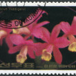 NORTH KOREA - CIRCA 1984: A stamp printed in North Korea shows an orchid Cattleya loddigesii, circa 1984 — Stock Photo #12465747