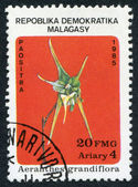 MALAGASY REPUBLIC-CIRCA 1985: Postage stamps printed in Malagasy, shows a tropical flower Aeranthes grandiflora, circa 1985 — Foto Stock