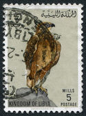 KINGDOM OF LIBYA - CIRCA 1965: Postage stamps printed in Libya, shows a Long-legged Buzzard (Buteo rufinus), circa 1965 — Stock Photo
