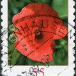 A stamp printed in Germany, shows the flower of Corn Poppy — Stock Photo