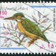 A stamp printed in the Iran, depicts a bird The Common Kingfisher — Stock Photo
