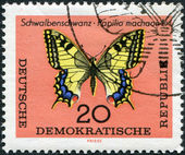 DDR - CIRCA 1964: A stamp printed in DDR, shows a Swallowtail butterfly, circa 1964 — Stock Photo