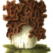 "Edible fungus Gyromitra esculenta. Publication of the book ""Meyers Konversations-Lexikon"", Volume 7, Leipzig, Germany, 1910 — Stock Photo"
