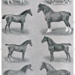 ������, ������: Different breeds of horses Publication of the book Meyers Konversations Lexikon Volume 7 Leipzig Germany 1910