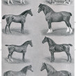 Different breeds of horses. Publication of the book &amp;quot;Meyers Konversations-Lexikon&amp;quot;, Volume 7, Leipzig, Germany, 1910 - Stock Photo
