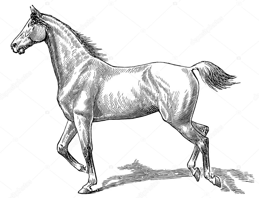 The Style Walk A Horse Gallop Right Stock Vector S