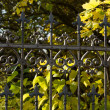 Stock Photo: Forged fences