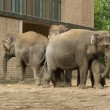 The elephants at the zoo - Stock Photo