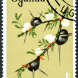 Postage stamp Uganda, shows Acacia drepanolobium — Stock Photo