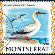 Stock Photo: Postage stamp Montserrat (British Overseas Territory), shows Red-footed Booby (Sulsula)