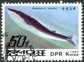 A postage stamp printed in North Korea shows the blue whale (Balaenoptera musculus) — Stock Photo