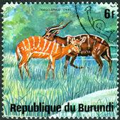 BURUNDI - CIRCA 1975: A stamp printed in Burundi, shows Sitatunga (Tragelaphus spekii), circa 1975 — Zdjęcie stockowe
