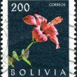 BOLIVIA - CIRCA 1962: Postage stamps printed in Bolivia, shows a plant Hibiscus rosa-sinensis, circa 1962 — Stock Photo