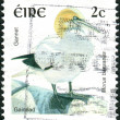 IRELAND - CIRCA 1997: Postage stamp printed in Ireland shows a seabird Northern Gannet (Morus bassanus), circa 1997 — Stock Photo