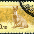 RUSSIA - CIRCA 2008: Postage stamp printed in Russia, shows a rabbit, circa 2008 — ストック写真