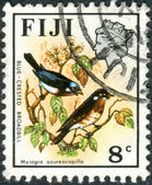 FIJI - CIRCA 1971: A postage stamp printed in Fiji shows a bird Azure-crested Flycatcher (Myiagra azureocapilla), circa 1971 — Stock Photo