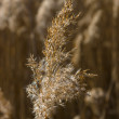 Stock Photo: Dry grass