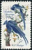 A postage stamp printed in the USA, John J. Audubon Issue, shows Columbia Jays by design is from a mural by Howard Pyle — Stock Photo