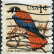 Postage stamp printed in the USA, shows American Kestrel (Falco sparverius) — Stock Photo
