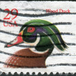 Stock Photo: Postage stamp printed in the USA, shows a Wood Duck or Carolina Duck (Aix sponsa)