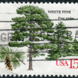 Postage stamp printed in USA, shows White Pine (Pinus strobus) — Stock Photo #37743469