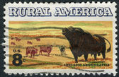 Postage stamp printed in the USA, devoted to the centenary of introduction of Aberdeen Angus cattle to US, shows Angus and Longhorn Cattle — Stock Photo