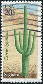 A postage stamp printed in USA, shows cactus Saguaro (Carnegiea gigantea) — Stock Photo