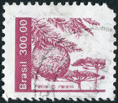 Postage stamp printed in Brazil, shows Conifer cone of Araucaria angustifolia — Stock Photo